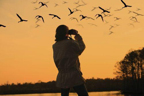 A person looking at birds through binoculars
