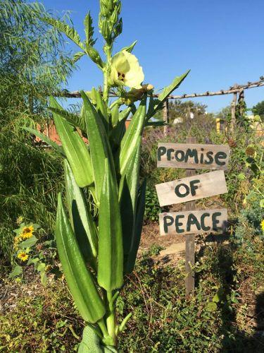 Promise of Peace Garden